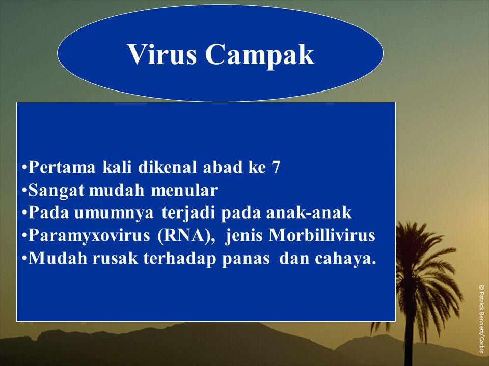Virus Campak Pertama kali dikenal abad ke 7 Sangat mudah menular Pada umumnya terjadi pada anak-anak Paramyxovirus (RNA), jenis Morbillivirus Mudah ru