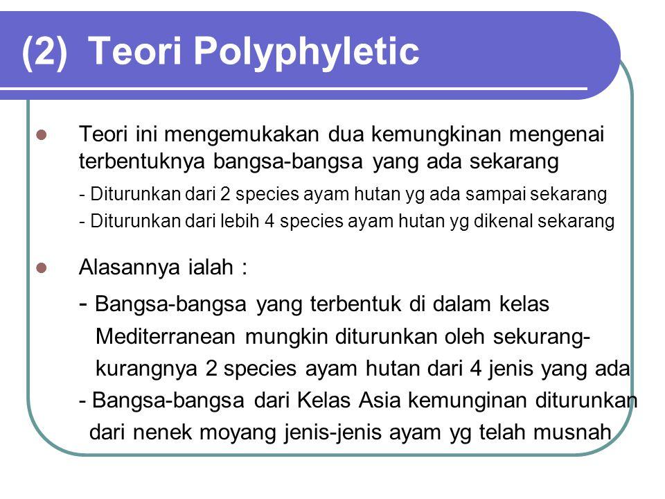 (2)Teori Polyphyletic Teori ini mengemukakan dua kemungkinan mengenai terbentuknya bangsa-bangsa yang ada sekarang - Diturunkan dari 2 species ayam hu
