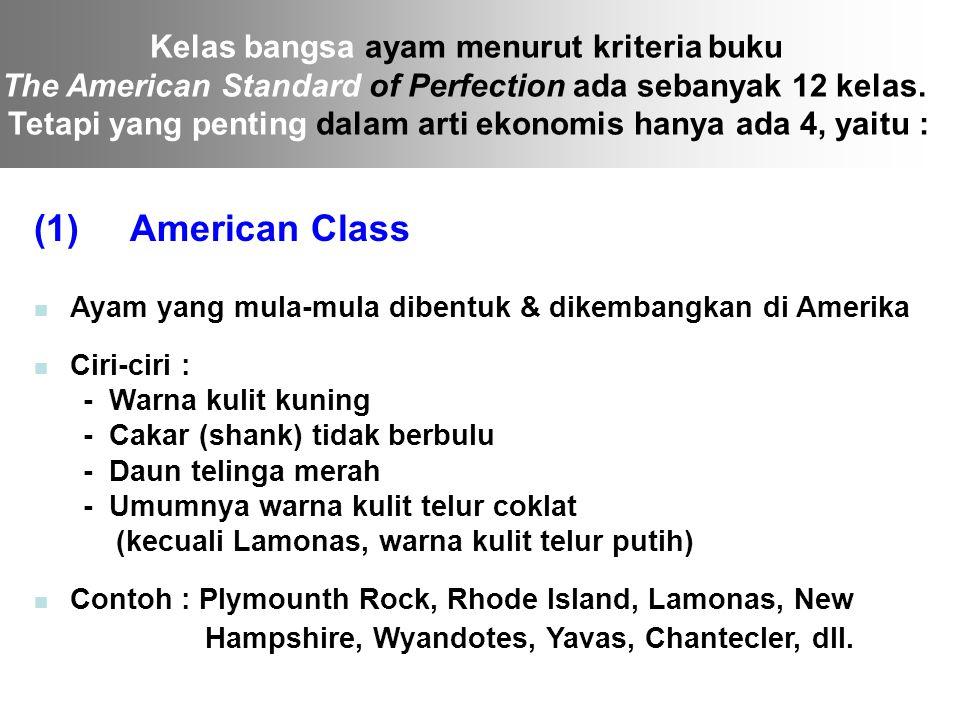 Kelas bangsa ayam menurut kriteria buku The American Standard of Perfection ada sebanyak 12 kelas. Tetapi yang penting dalam arti ekonomis hanya ada 4
