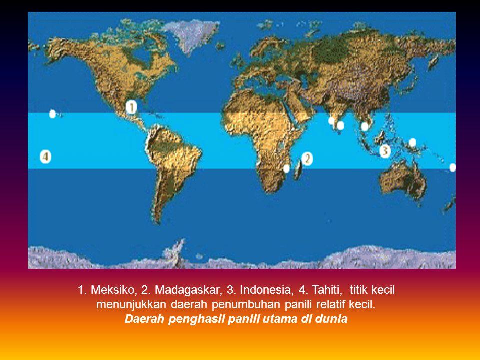 BOTANI Tanaman panili termasuk ke dalam famili anggrek (Orchidaceae) Vanilla planifolia Andrews Vanilla pompana Scheide Vanilla tahitiensis J.W.