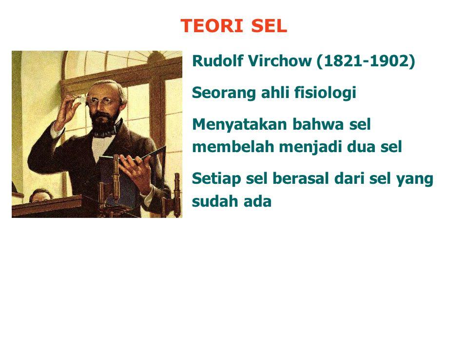 TEORI SEL Rudolf Virchow (1821-1902) Seorang ahli fisiologi Menyatakan bahwa sel membelah menjadi dua sel Setiap sel berasal dari sel yang sudah ada