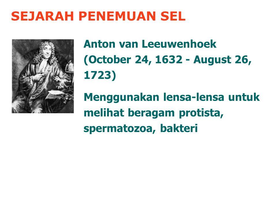 SEJARAH PENEMUAN SEL Anton van Leeuwenhoek (October 24, 1632 - August 26, 1723) Menggunakan lensa-lensa untuk melihat beragam protista, spermatozoa, bakteri