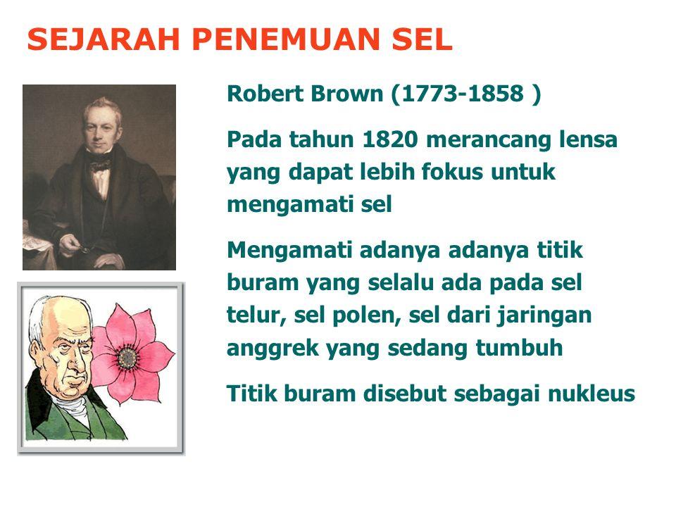 SEJARAH PENEMUAN SEL Robert Brown (1773-1858 ) Pada tahun 1820 merancang lensa yang dapat lebih fokus untuk mengamati sel Mengamati adanya adanya titik buram yang selalu ada pada sel telur, sel polen, sel dari jaringan anggrek yang sedang tumbuh Titik buram disebut sebagai nukleus