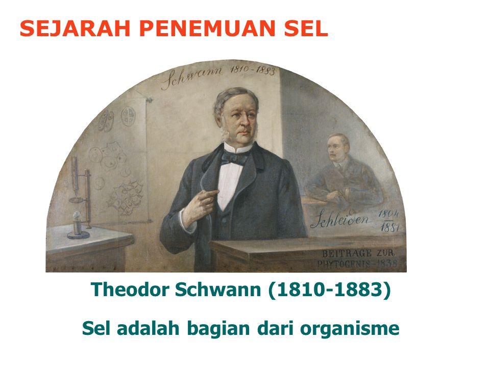 SEJARAH PENEMUAN SEL Theodor Schwann (1810-1883) Sel adalah bagian dari organisme