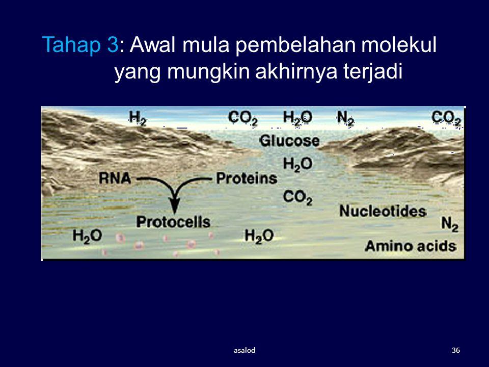 Tahap 3: Awal mula pembelahan molekul yang mungkin akhirnya terjadi asalod36