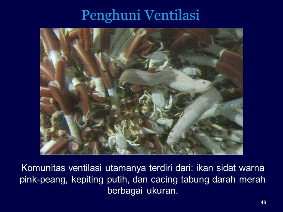 Penghuni Ventilasi Komunitas ventilasi utamanya terdiri dari: ikan sidat warna pink-peang, kepiting putih, dan cacing tabung darah merah berbagai ukur
