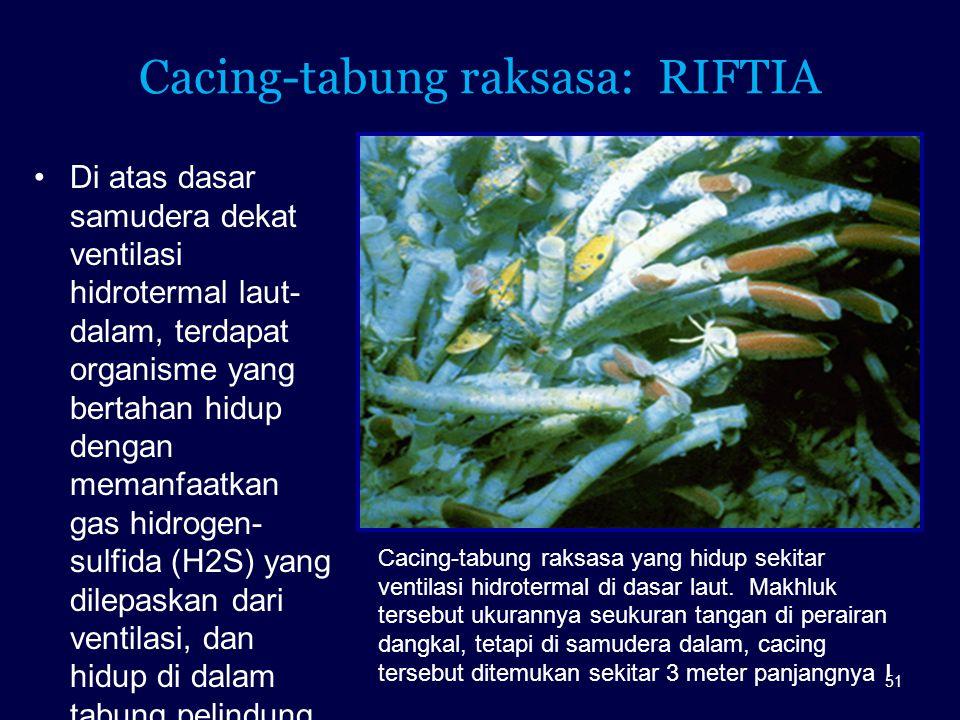Cacing-tabung raksasa: RIFTIA Di atas dasar samudera dekat ventilasi hidrotermal laut- dalam, terdapat organisme yang bertahan hidup dengan memanfaatk