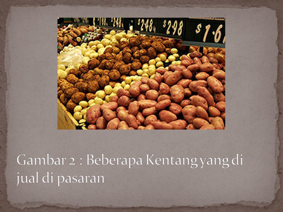 Kentang (Solanum tuberosum L.) adalah tanaman dari suku Solanaceae yang memiliki umbi batang Umbi kentang sekarang telah menjadi salah satu makanan pokok penting di Eropa.