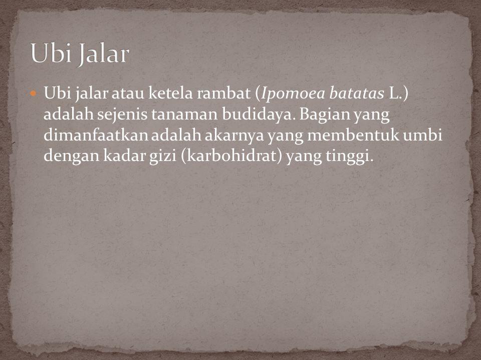 Palawija secara harfiah berarti tanaman kedua .