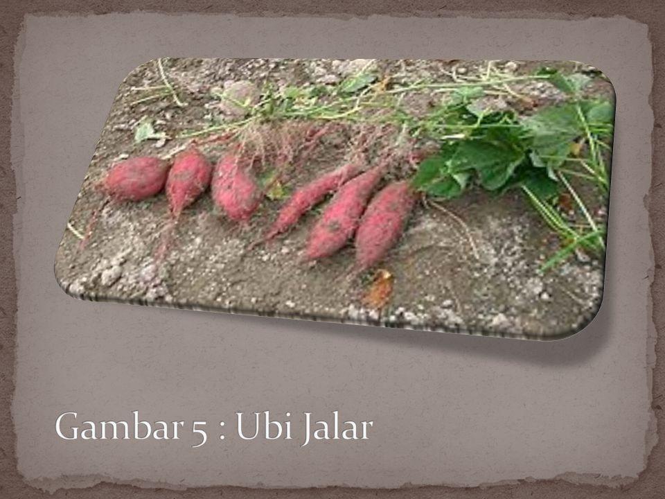 Ubi jalar atau ketela rambat (Ipomoea batatas L.) adalah sejenis tanaman budidaya. Bagian yang dimanfaatkan adalah akarnya yang membentuk umbi dengan