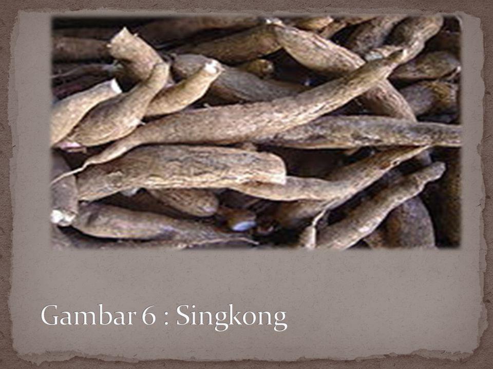 Singkong, yang juga dikenal sebagai ketela pohon atau ubi kayu, adalah pohon tahunan tropika dan subtropika dari keluarga Euphorbiaceae. Umbinya diken