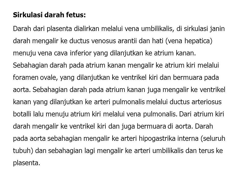 Sirkulasi darah fetus: Darah dari plasenta dialirkan melalui vena umbilikalis, di sirkulasi janin darah mengalir ke ductus venosus arantii dan hati (vena hepatica) menuju vena cava inferior yang dilanjutkan ke atrium kanan.