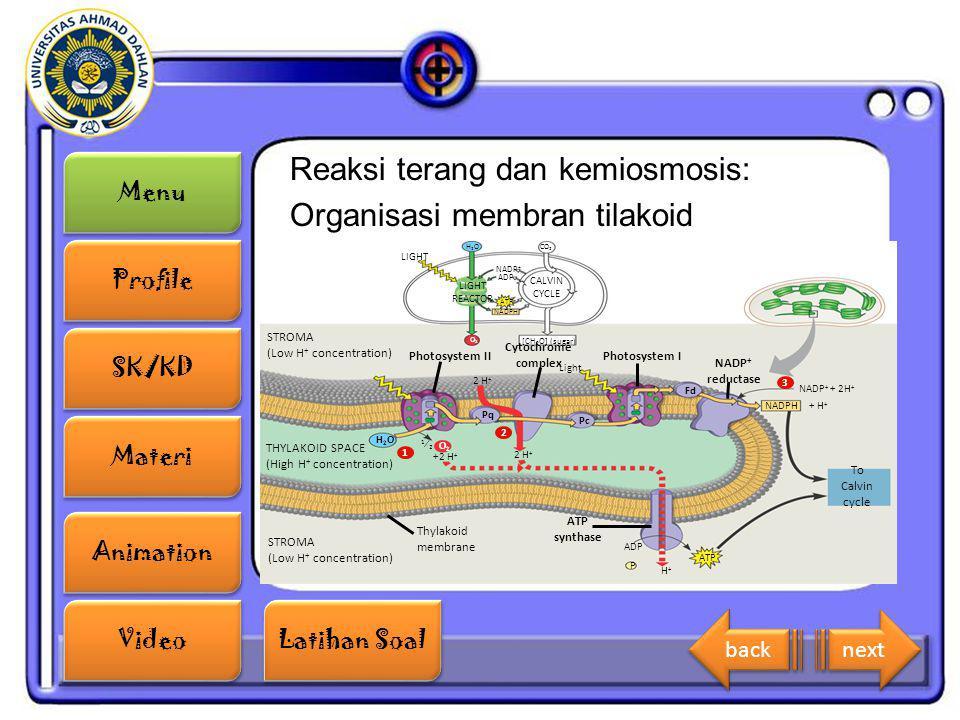 Menu Profile SK/KD Materi Animation Video Latihan Soal Latihan Soal Reaksi terang dan kemiosmosis: Organisasi membran tilakoid LIGHT REACTOR NADP + AD
