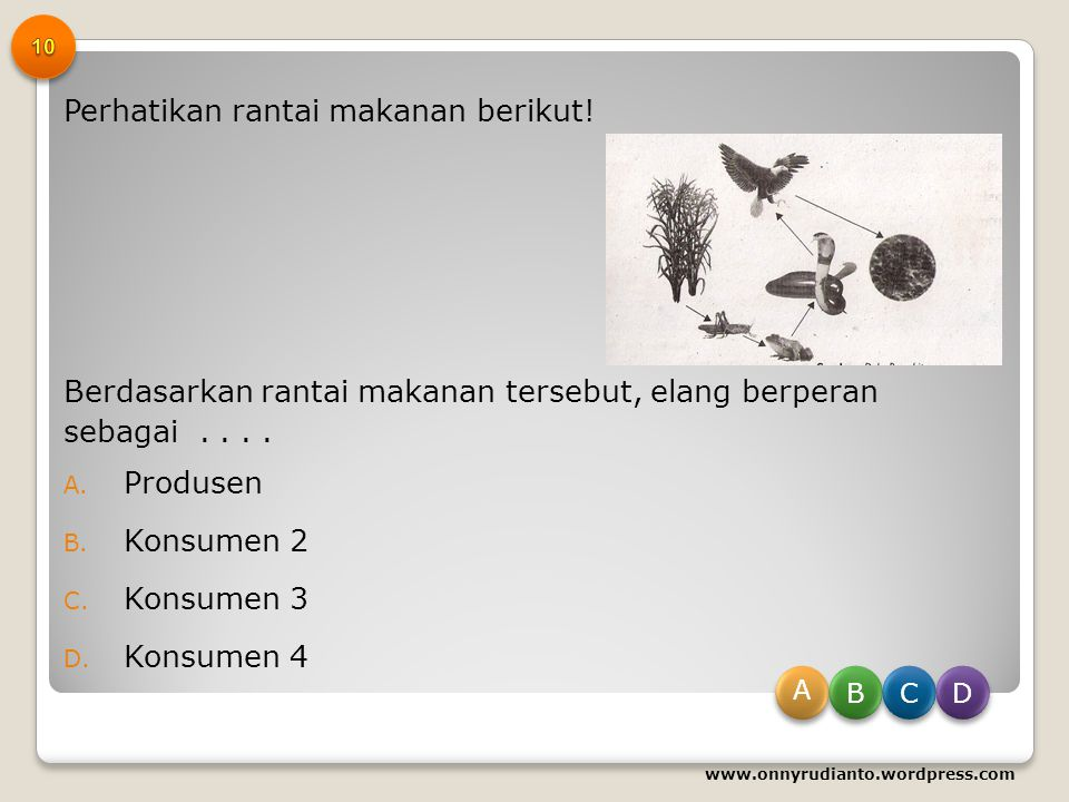 Rantai makanan yang terjadi di ekosistem danau adalah... A. Ganggang – ikan sepat – ikan gabus – berang-berang B. Ganggang – ikan sepat – berang-beran