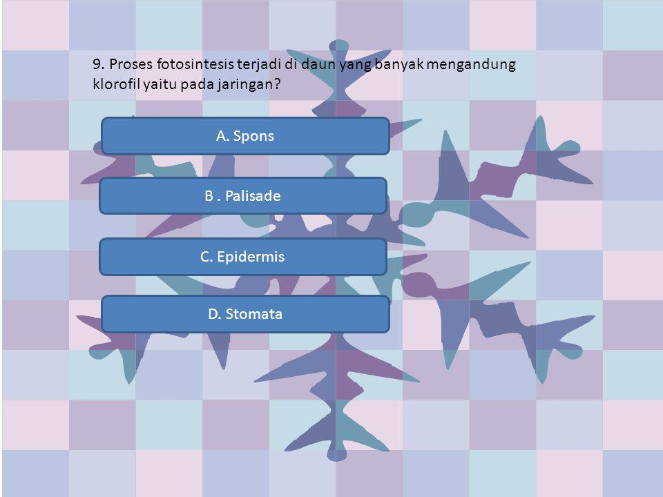 9. Proses fotosintesis terjadi di daun yang banyak mengandung klorofil yaitu pada jaringan? B. Palisade C. Epidermis D. Stomata A. Spons