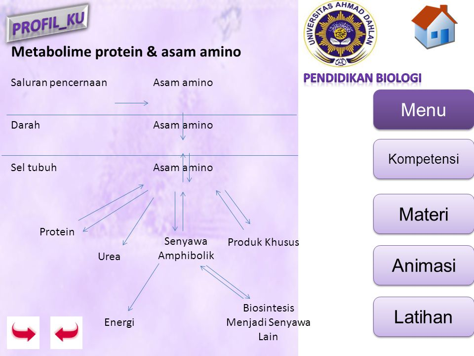 Menu Kompetensi Materi Animasi Latihan Reaksinya yg terjadi : 1.Katabolisme * katabolisme nitrogen asam amino  urea * katabolisme kerangka C asam amino  senyawa amfibolik 2.Anabolisme / biosintesis protein 3.Pembentukan produk khusus A.Katabolisme Nitrogen asam amino Tahapannya : i.Transaminasi ii.Deaminasi Oksidatif iii.Transport Amino iv.Siklus Urea