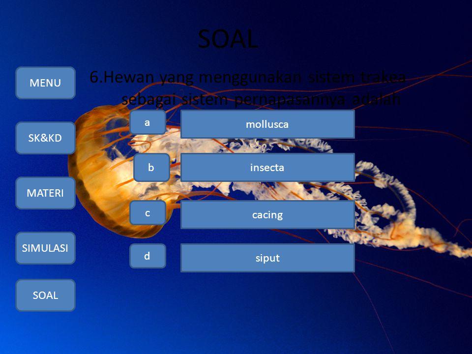 SOAL 6.Hewan yang menggunakan sistem trakea sebagai sistem pernapasannya adalah MENU SK&KD MATERI SIMULASI SOAL a b c d mollusca insecta cacing siput