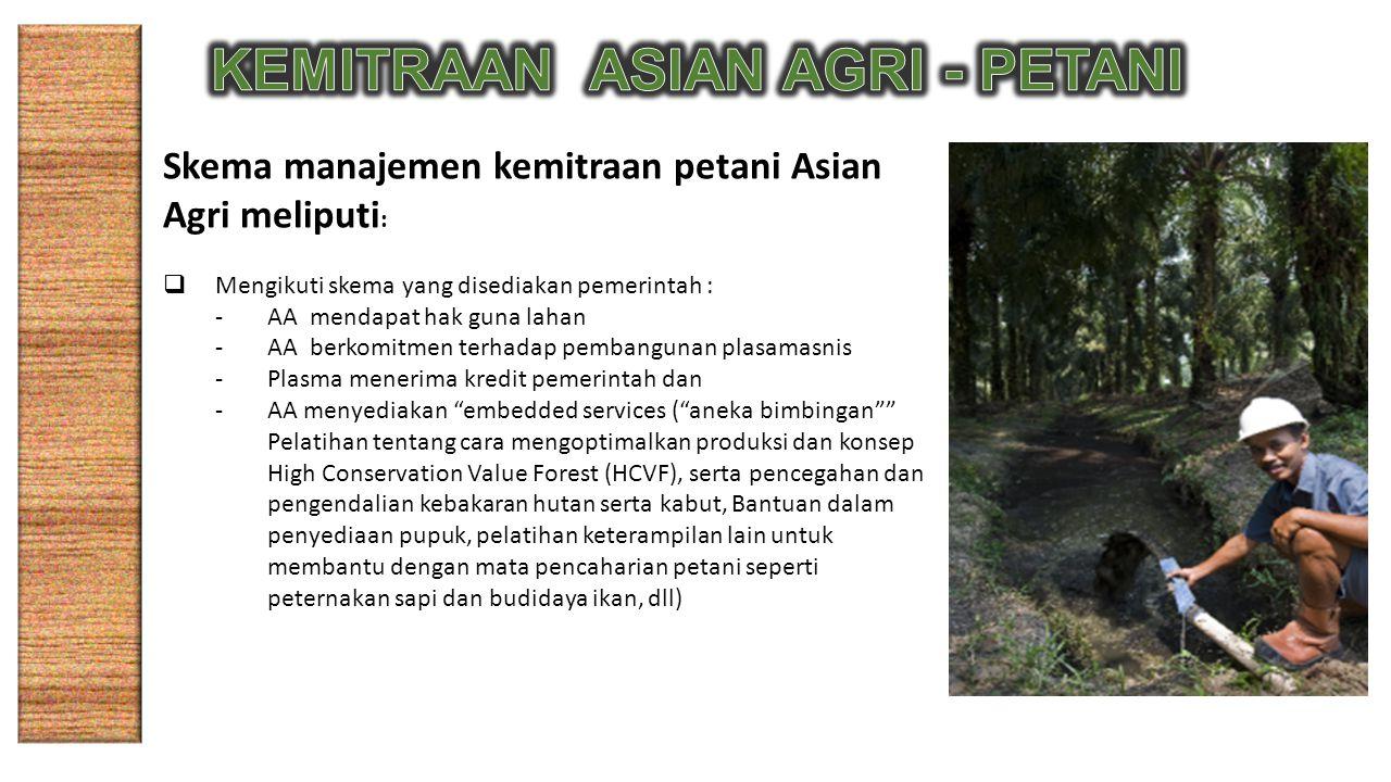 Skema manajemen kemitraan petani Asian Agri meliputi :  Mengikuti skema yang disediakan pemerintah : -AA mendapat hak guna lahan -AA berkomitmen terhadap pembangunan plasamasnis -Plasma menerima kredit pemerintah dan -AA menyediakan embedded services ( aneka bimbingan Pelatihan tentang cara mengoptimalkan produksi dan konsep High Conservation Value Forest (HCVF), serta pencegahan dan pengendalian kebakaran hutan serta kabut, Bantuan dalam penyediaan pupuk, pelatihan keterampilan lain untuk membantu dengan mata pencaharian petani seperti peternakan sapi dan budidaya ikan, dll)