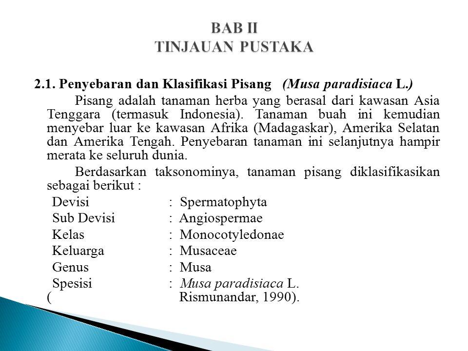 2.1. Penyebaran dan Klasifikasi Pisang (Musa paradisiaca L.) Pisang adalah tanaman herba yang berasal dari kawasan Asia Tenggara (termasuk Indonesia).