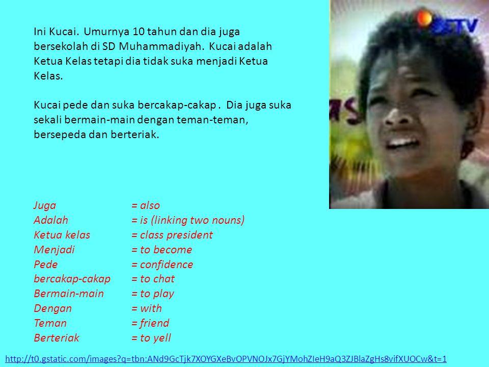 http://t0.gstatic.com/images?q=tbn:ANd9GcTjk7XOYGXeBvOPVNOJx7GjYMohZIeH9aQ3ZJBlaZgHs8vifXUOCw&t=1 Ini Kucai. Umurnya 10 tahun dan dia juga bersekolah