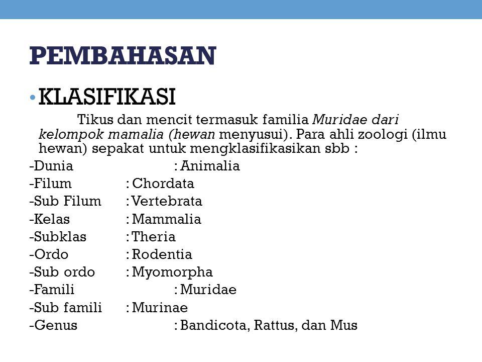 PEMBAHASAN KLASIFIKASI Tikus dan mencit termasuk familia Muridae dari kelompok mamalia (hewan menyusui). Para ahli zoologi (ilmu hewan) sepakat untuk