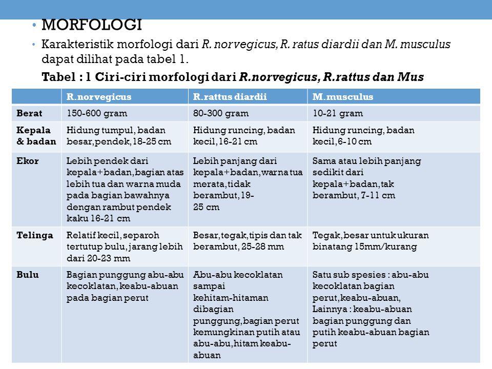 MORFOLOGI Karakteristik morfologi dari R. norvegicus, R. ratus diardii dan M. musculus dapat dilihat pada tabel 1. Tabel : 1 Ciri-ciri morfologi dari