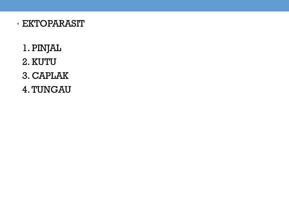 EKTOPARASIT 1. PINJAL 2. KUTU 3. CAPLAK 4. TUNGAU
