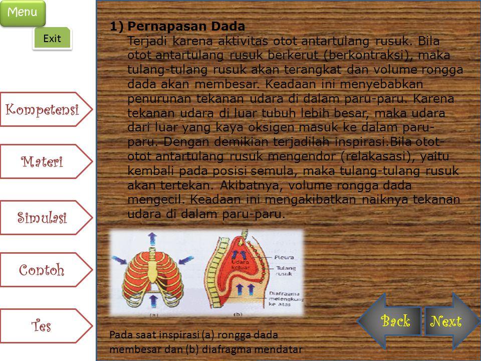 1)Pernapasan Dada Terjadi karena aktivitas otot antartulang rusuk. Bila otot antartulang rusuk berkerut (berkontraksi), maka tulang-tulang rusuk akan
