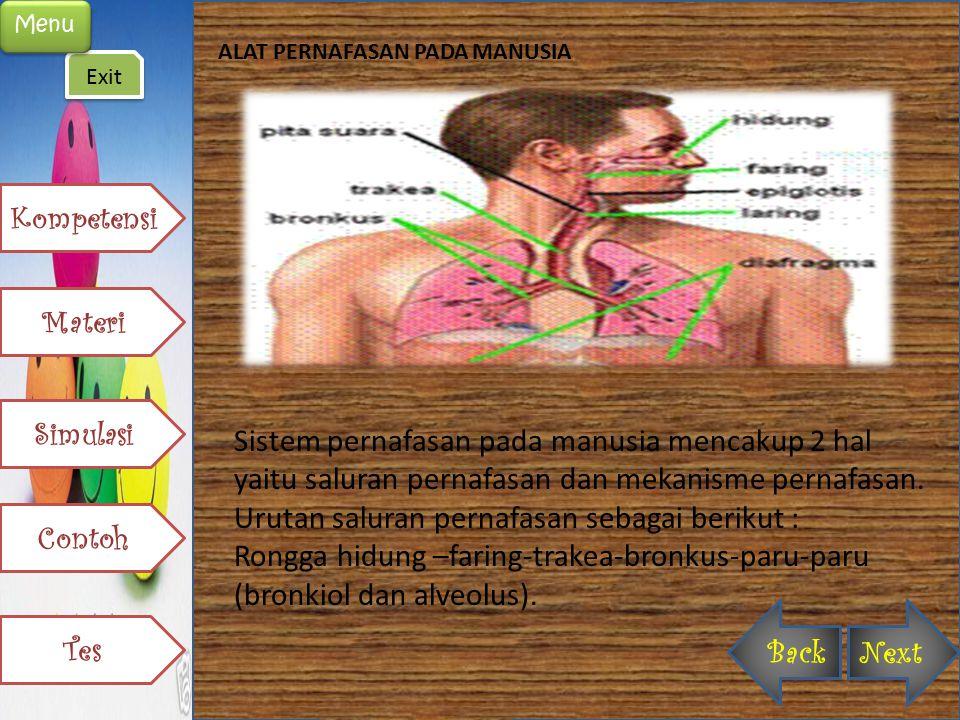 ALAT PERNAFASAN PADA MANUSIA Sistem pernafasan pada manusia mencakup 2 hal yaitu saluran pernafasan dan mekanisme pernafasan. Urutan saluran pernafasa