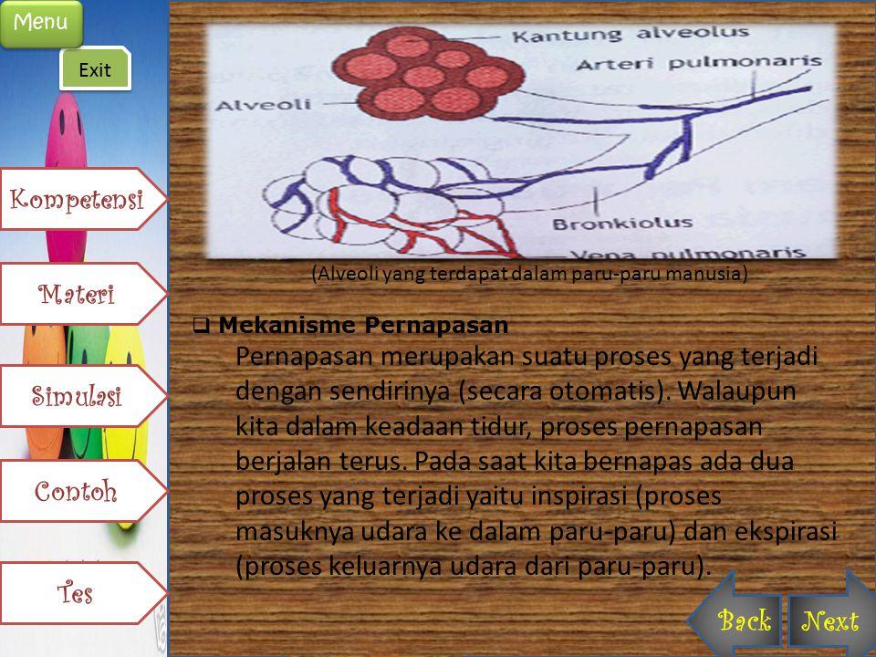 (Alveoli yang terdapat dalam paru-paru manusia)  Mekanisme Pernapasan Pernapasan merupakan suatu proses yang terjadi dengan sendirinya (secara otomat