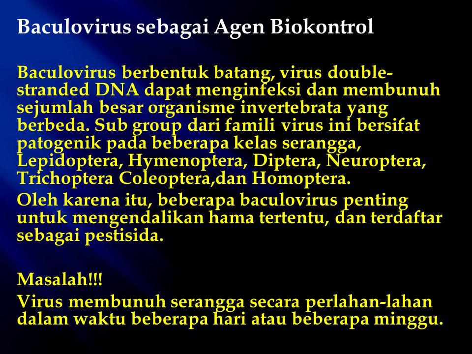 Baculovirus sebagai Agen Biokontrol Baculovirus berbentuk batang, virus double- stranded DNA dapat menginfeksi dan membunuh sejumlah besar organisme i