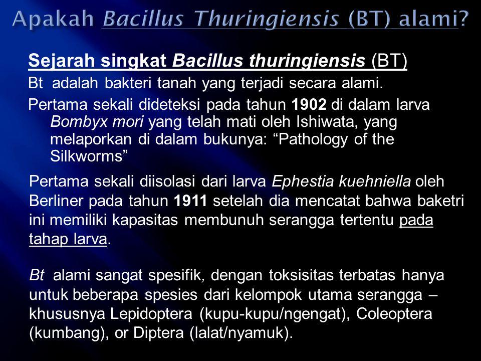 Sejarah singkat Bacillus thuringiensis (BT) Bt adalah bakteri tanah yang terjadi secara alami. Pertama sekali dideteksi pada tahun 1902 di dalam larva