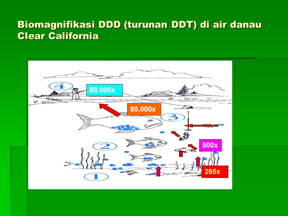 Biomagnifikasi DDD (turunan DDT) di air danau Clear California 265x 500x 85.000x 80.000x