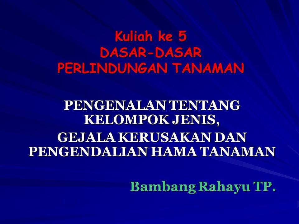 Kuliah ke 5 DASAR-DASAR PERLINDUNGAN TANAMAN PENGENALAN TENTANG KELOMPOK JENIS, GEJALA KERUSAKAN DAN PENGENDALIAN HAMA TANAMAN Bambang Rahayu TP.