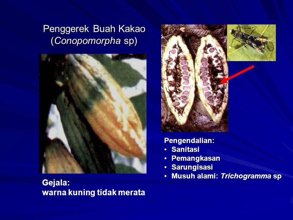 Penggerek Buah Kakao (Conopomorpha sp) Gejala: warna kuning tidak merata Pengendalian: SanitasiSanitasi PemangkasanPemangkasan SarungisasiSarungisasi