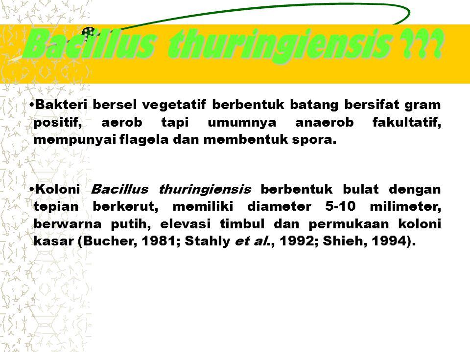 BIOINSEKTISIDA BAKTERI Spesies Bakteri Nama Dagang Produser Bacillus moritae Rabirusu Sumitomo, Jepang Bacillus popilliae Doom, japidemic Fairfax Bio USA Bacillus thuringiensis (delta endotoksin) : Agritol Merck & Co, USA Bakhtane Rohm & Haas, USA Bactospeine Roger Bellon, Perancis Bathurin Cheko Biospor Jerman Biotrol USA Dipel Abbbot, USA Sporeine Perancis Thuricide Sandoz, USA Vectobac Abbot, USA dll.