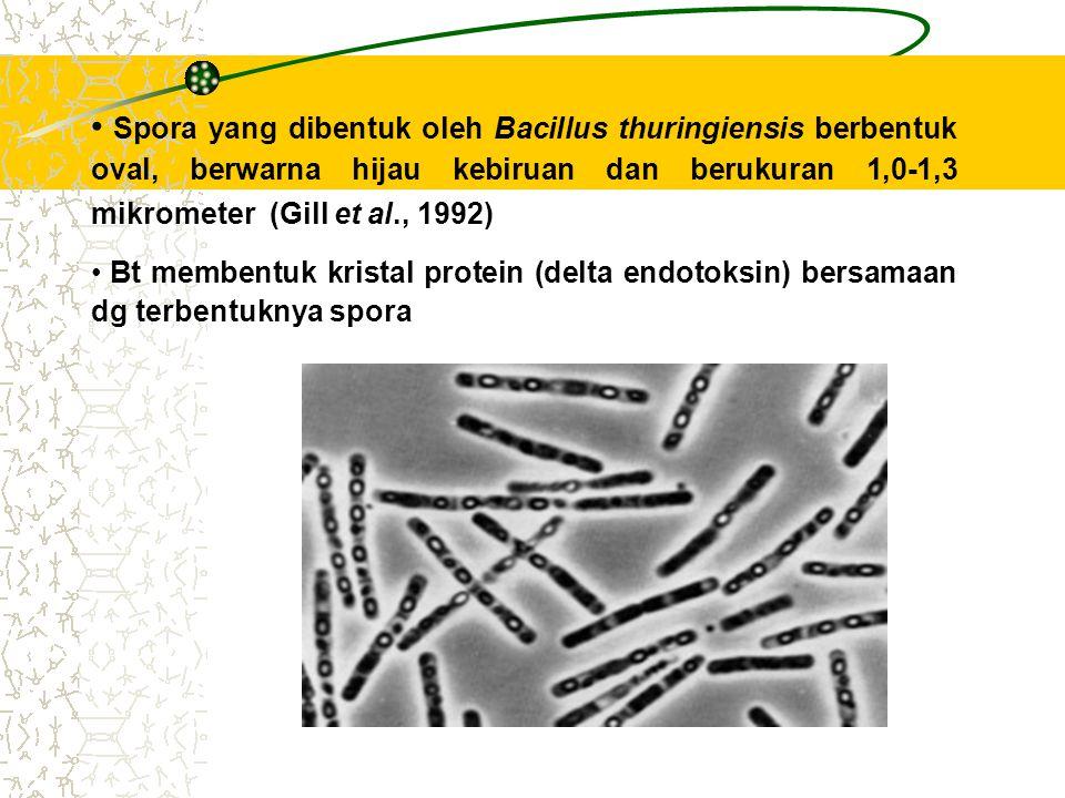 Spora yang dibentuk oleh Bacillus thuringiensis berbentuk oval, berwarna hijau kebiruan dan berukuran 1,0-1,3 mikrometer (Gill et al., 1992) Bt membentuk kristal protein (delta endotoksin) bersamaan dg terbentuknya spora