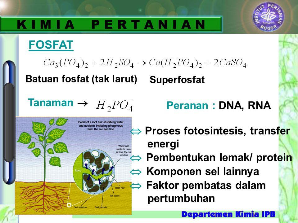 Batuan fosfat (tak larut) Superfosfat Tanaman   Proses fotosintesis, transfer energi  Pembentukan lemak/ protein  Komponen sel lainnya  Faktor pe
