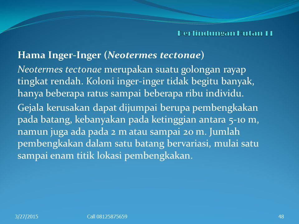 Hama Inger-Inger (Neotermes tectonae) Neotermes tectonae merupakan suatu golongan rayap tingkat rendah. Koloni inger-inger tidak begitu banyak, hanya