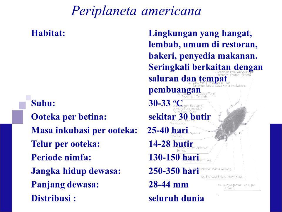 Periplaneta americana Habitat: Lingkungan yang hangat, lembab, umum di restoran, bakeri, penyedia makanan. Seringkali berkaitan dengan saluran dan tem