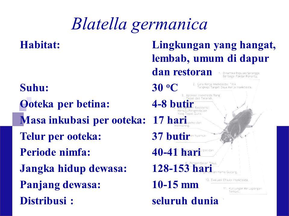 Blatella germanica Habitat: Lingkungan yang hangat, lembab, umum di dapur dan restoran Suhu:30 o C Ooteka per betina:4-8 butir Masa inkubasi per ootek