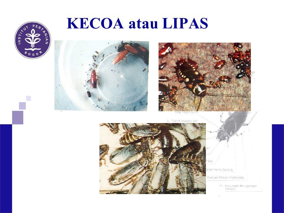 KECOA atau LIPAS