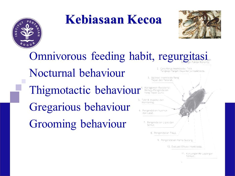 Kebiasaan Kecoa Omnivorous feeding habit, regurgitasi Nocturnal behaviour Thigmotactic behaviour Gregarious behaviour Grooming behaviour