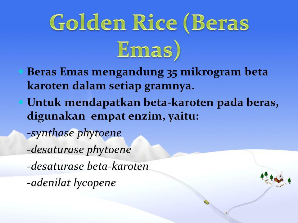 Beras Emas mengandung 35 mikrogram beta karoten dalam setiap gramnya. Untuk mendapatkan beta-karoten pada beras, digunakan empat enzim, yaitu: -syntha
