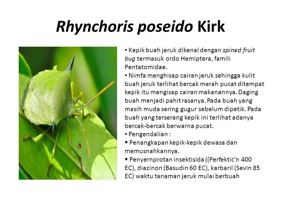 Rhynchoris poseido Kirk Kepik buah jeruk dikenal dengan spined fruit bug termasuk ordo Hemiptera, famili Pentatomidae. Nimfa menghisap cairan jeruk se