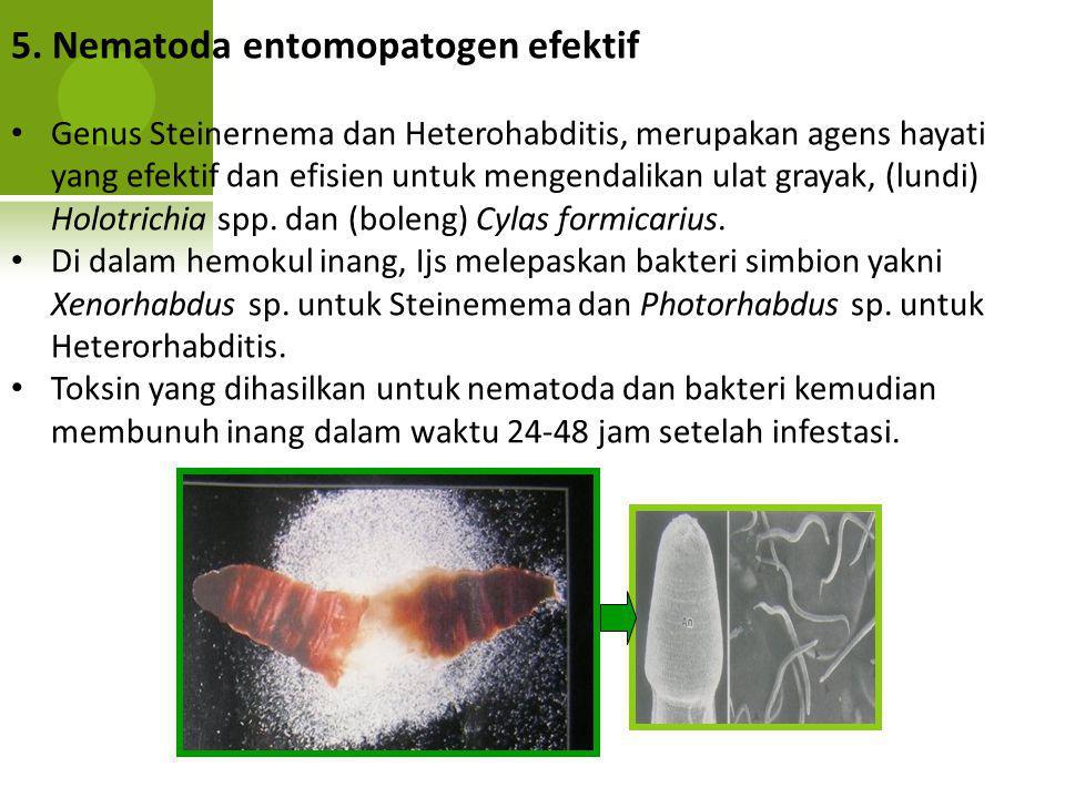 5. Nematoda entomopatogen efektif Genus Steinernema dan Heterohabditis, merupakan agens hayati yang efektif dan efisien untuk mengendalikan ulat graya