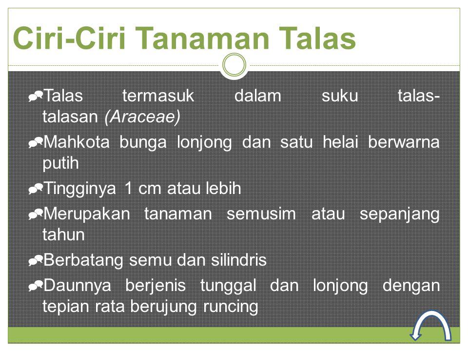 Ciri-Ciri Tanaman Talas  Talas termasuk dalam suku talas- talasan (Araceae)  Mahkota bunga lonjong dan satu helai berwarna putih  Tingginya 1 cm at
