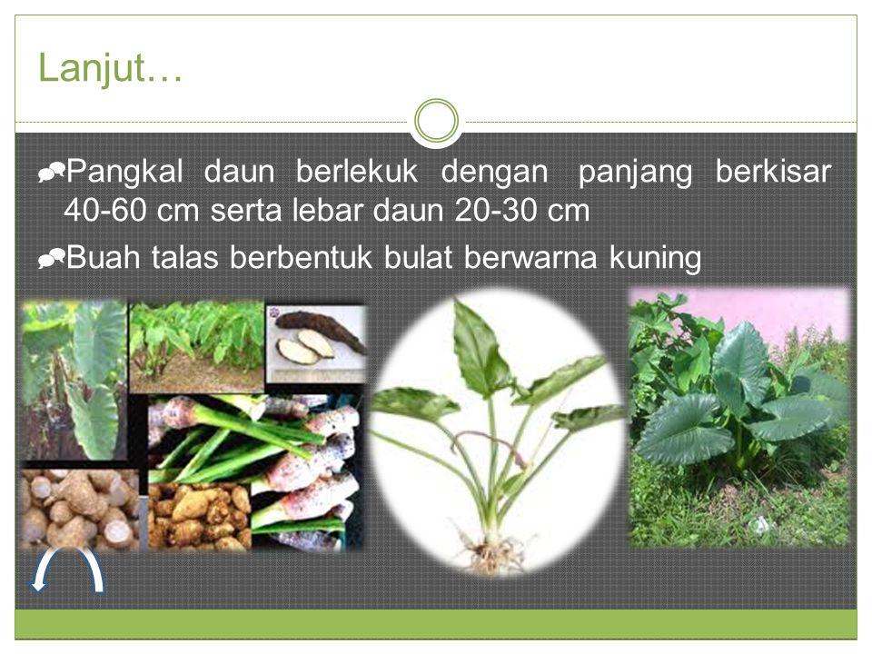 Lanjut…  Pangkal daun berlekuk dengan panjang berkisar 40-60 cm serta lebar daun 20-30 cm  Buah talas berbentuk bulat berwarna kuning