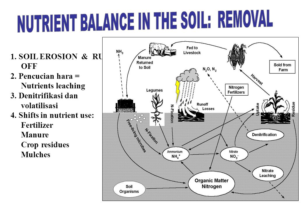 19 1. SOIL EROSION & RUN- OFF 2. Pencucian hara = Nutrients leaching 3. Denitrifikasi dan volatilisasi 4. Shifts in nutrient use: Fertilizer Manure Cr