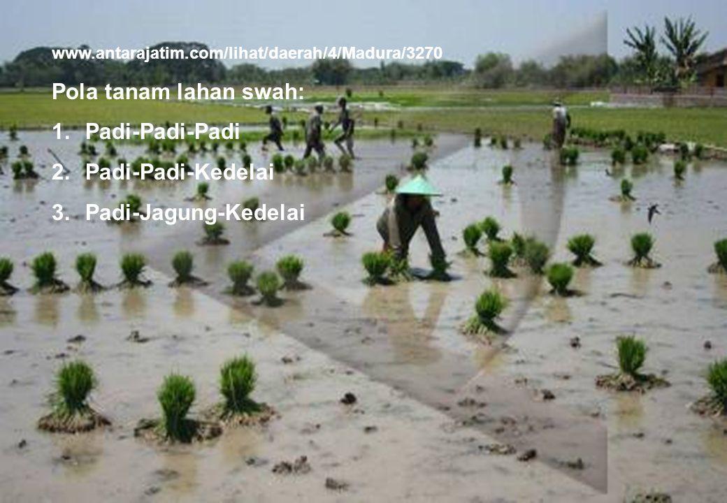 28 www.antarajatim.com/lihat/daerah/4/Madura/3270 Pola tanam lahan swah: 1.Padi-Padi-Padi 2.Padi-Padi-Kedelai 3.Padi-Jagung-Kedelai